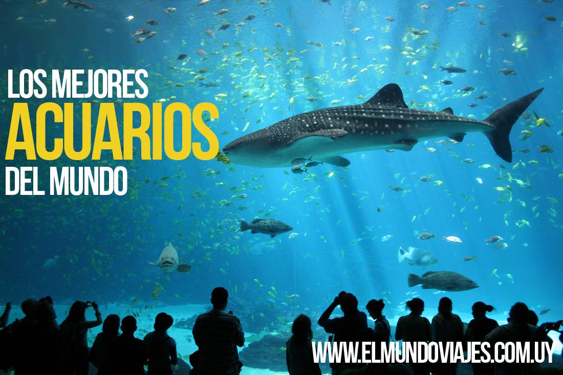 Los mejores acuarios del mundo el mundo viajes salto for Mejores carnavales del mundo